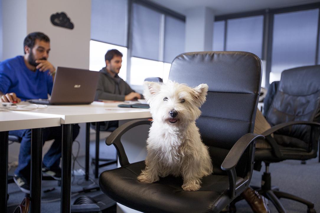 Cara Jitu Membuat Karyawan Betah Di Kantor- Memiliki Hewan Peliharaan